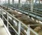 Aplicación completa obligatoria del Reglamento (CE) nº 1099/2009 relativo a la protección de los animales en el momento de la matanza