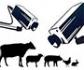 El Gobierno saca a consulta pública el real decreto de videovigilancia en mataderos