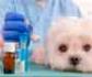 La AEMPS establece un nuevo proceso para que los veterinarios puedan comunicar los problemas de suministro de algunos medicamentos veterinarios, debido al desabastecimiento de algunos laboratorios