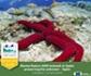 España, candidata a los Premios Natura 2000 que entrega la Comisión Europea por su trabajo en materia de conservación marina en el proyecto LIFE+ INDEMARES