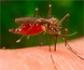 Virus del Nilo: Recomiendan una estrategia 'One Health', tras el aumento de casos en España
