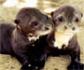 El Zoo de Madrid reabre sus puertas, con numerosos nacimientos de animales de diferentes especies durante el confinamiento
