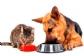 FEDIAF presenta las últimas guías nutricionales con pautas actualizadas para perros y gatos