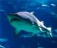 WWF: El deterioro de los océanos amenaza la seguridad alimentaria global