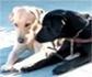 La facultad de veterinaria de la UCM, convoca prácticas para sus estudiantes en la Fundación ONCE del Perro Guía