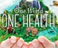 2020: el año en que la pandemia mostró la importancia de pensar en 'Una Sola Salud', contando con los veterinarios