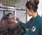 El Congreso pide al Gobierno que legisle para prohibir el comercio y la tenencia de primates