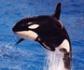 Científicos veterinarios de la Universidad de las Palmas de Gran Canaria, investigan la mortalidad de las orcas