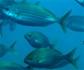 OIE: Una nueva estrategia, impulsa a la comunidad internacional a mejorar la sanidad y el bienestar de los animales acuáticos en el mundo