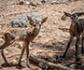 La OCV advierte de que la pérdida de biodiversidad incrementa el riesgo de emergencia y reemergencia de enfermedades zoonósicas