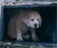 Más de 300 animales son abandonados cada día en España