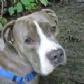 Tratamiento médico del carcinoma de células escamosas oral maxilar en perros