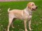 El factor estimulante de colonias granulocíticas recombinante canino, mejora la supervivencia en perros con parvovirosis