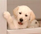 La facultad de veterinaria de la UCM convoca prácticas para sus estudiantes en la Fundación ONCE del Perro Guía