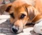 Nota informativa sobre supuestas adopciones de perros incontroladas e incremento de abandonos