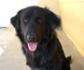 Veterinaria 2030: crece la adopción de mascotas, se