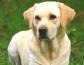 Ictus en perros y principales síntomas que nos hacen sospechar