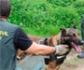 El Seprona incauta 47 cebos envenenados en 2019, gracias a perros entrenados para detectarlos