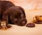 El chocolate, un dulce típico de esta época de Pascua, un auténtico 'veneno' para los perros