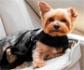 ¿Te pueden multar por llevar a tu mascota en el coche durante la desescalada?