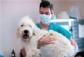 WSAVA actualiza la información sobre el coronavirus y los animales de compañía