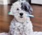 El futuro de la odontología en mascotas, apunta hacia la aplicación de técnicas de diagnóstico por imagen más avanzadas