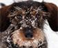 Consejos veterinarios para proteger a las mascotas del frío