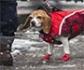 La Dirección General de Derechos de los Animales, ha publicado una tabla de temperaturas y adecuación de los perros, ante la ola de frío