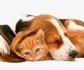 Europa crea una plataforma a favor del bienestar de las mascotas
