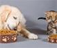 Fundación Affinity donará 50 toneladas de alimentos para perros y gatos a familias en riesgo de exclusión social