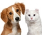 El mercado de medicamentos de animales de compañía goza de buena salud, a pesar de la crisis sanitaria