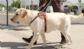 Andalucía ampliará la ley reguladora de los perros de asistencia a mayor número de colectivos y exigirá la identificación, vacunación y desparasitación de los animales