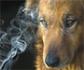 Mascotas: también fumadores pasivos