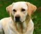 La importancia de concienciar sobre los mastocitomas, tumor de piel más frecuente en perros