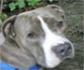 Síndrome vestibular perros: Breve revisión de la enfermedad