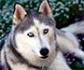 La progresión de la leishmaniosis canina está asociada con la deficiencia de vitamina D