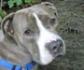 Prevalencia y mecanismos de resistencia a fluoroquinolonas en perros con otitis