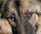 ¿Cómo evitar la ansiedad en las mascotas por el desconfinamiento?