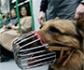 Más de 135.000 perros han viajado en el Metro de Madrid, durante el primer año que se ha permitido su acceso al suburbano