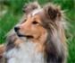Un novedoso implante de cartílago restaura la articulación de la cadera en perros