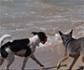 Playas para perros 2019: estos son los sitios donde te podrás bañar con tu mascota