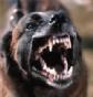 Confirman la muerte de un hombre por rabia tras la mordedura de un perro en Ucrania, una zona en Europa donde esta enfermedad es endémica