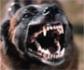 Golpe pionero al maltrato de perros: 34 detenidos por montar peleas a muerte