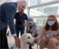Sanidad estudia extender la terapia con perros para enfermos con cáncer del Gregorio Marañón a otros hospitales