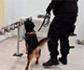 España prueba con éxito perros para detectar Covid-19 en cribados masivos