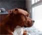 Ponen en marcha programas destinados a acoger temporalmente o adoptar a perros y gatos, cuyos dueños estén hospitalizados o hayan fallecido a causa del coronavirus