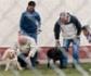 La terapia asistida con perros mejora la conducta de los presos