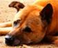 Consejos prácticos para los propietarios sobre el cuidado de las mascotas geriátricas