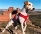 Pipper, el primer perro turista que da la vuelta a España