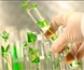 Investigadores españoles logran producir de manera eficiente proteínas antifúngicas en plantas